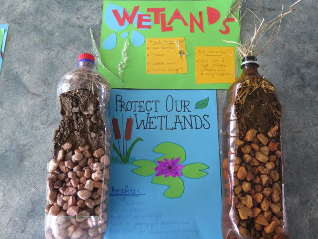 Wetland posters and model